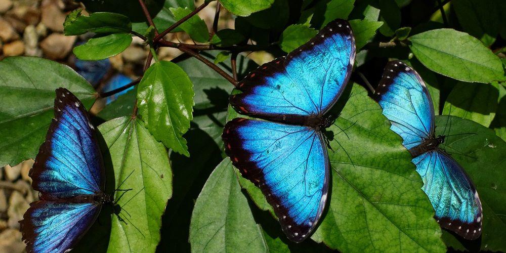 Vlinder als inspiratie voor gekleurd paneel