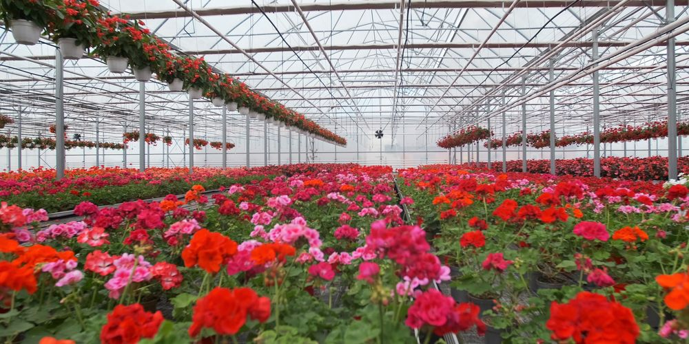 Prijs tuinbouwglas verdubbelt door groei PV-markt