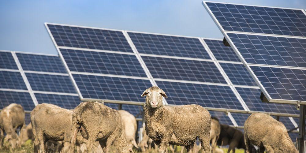 Na 20 jaar een nieuwe wetgeving voor energie: waarom nu pas?